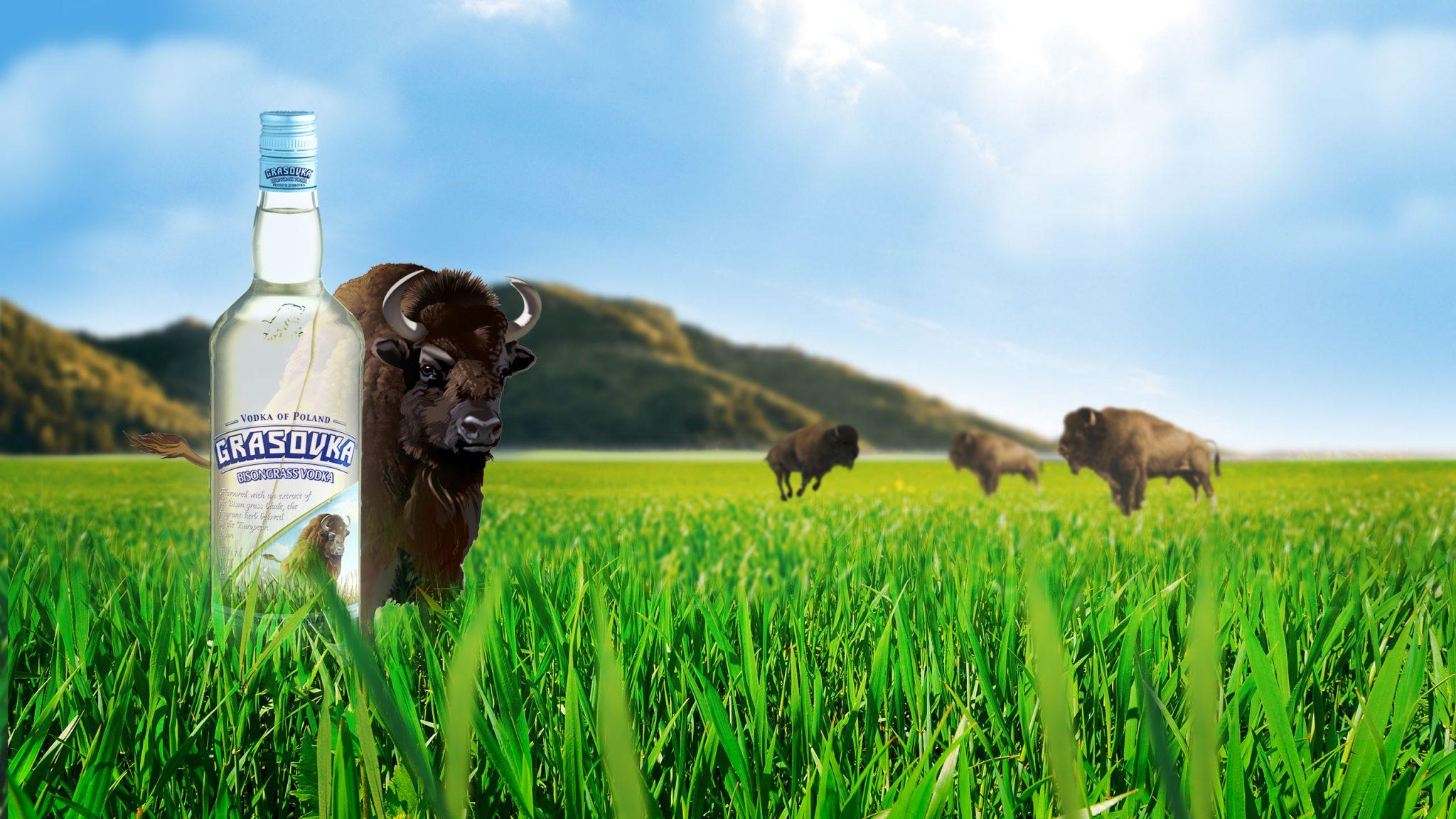 Büffelgras